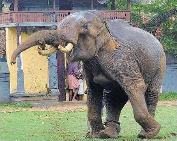 elephant-rage-06