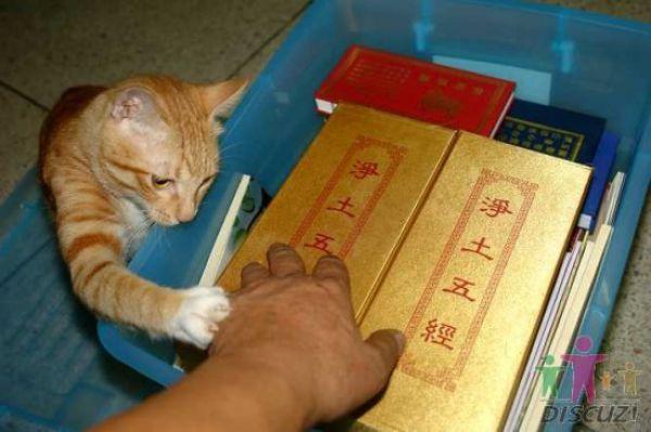 reading-cat-02