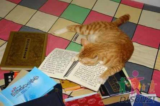 reading-cat-03
