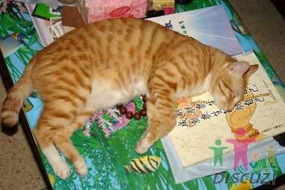 reading-cat-04
