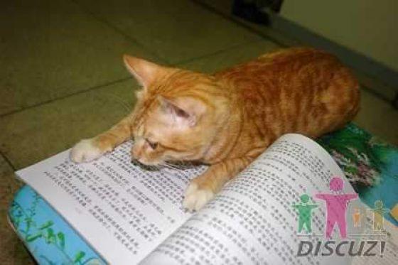 reading-cat-06