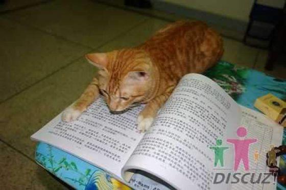 reading-cat-07