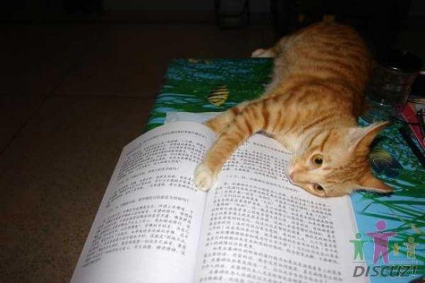reading-cat-09