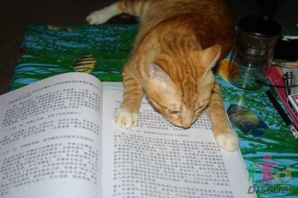 reading-cat-10