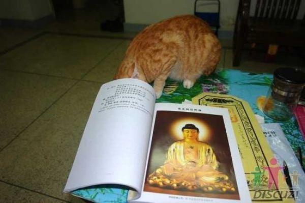 reading-cat-12