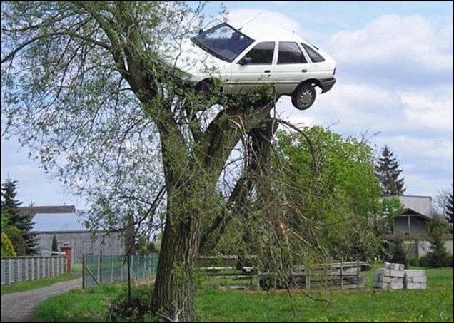 Машина на дереве