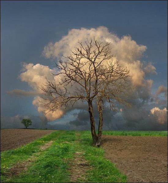 Дерево в облаках