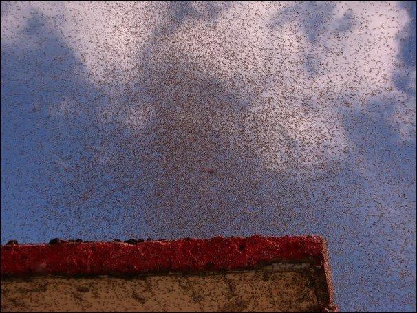 Огромные тучи комаров