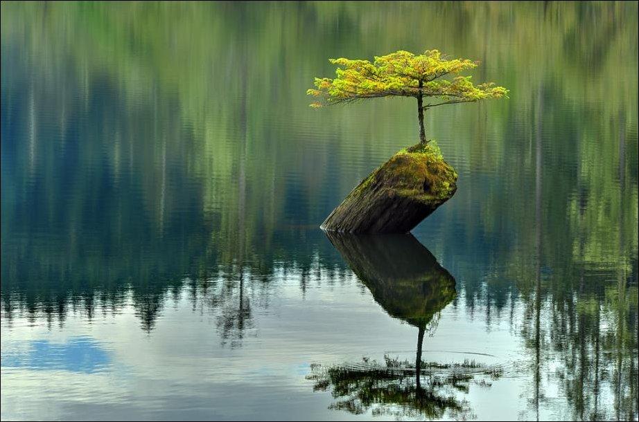 Одинокое дерево посреди озера в Канаде