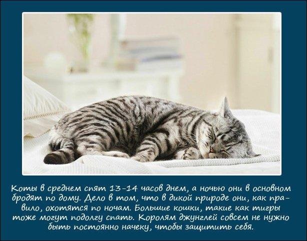 Как спят некоторые животные