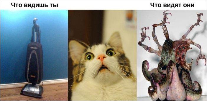 Окружающий мир глазами животных