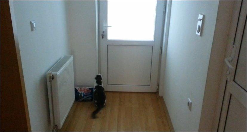 Кот открывает пять дверей чтобы выйти на прогулку