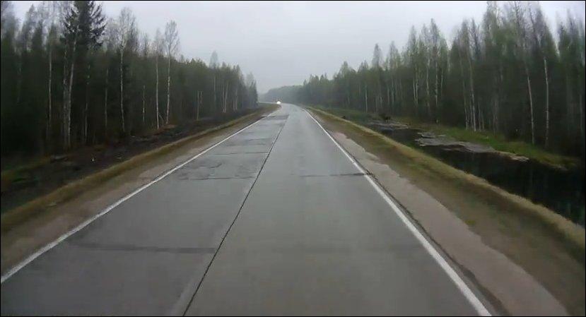 Лось выскочил на дорогу