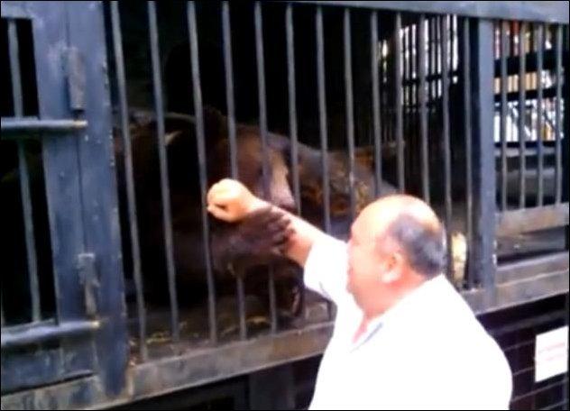Дядя Савелий рассказывает о своем зоопарке под Мариуполем
