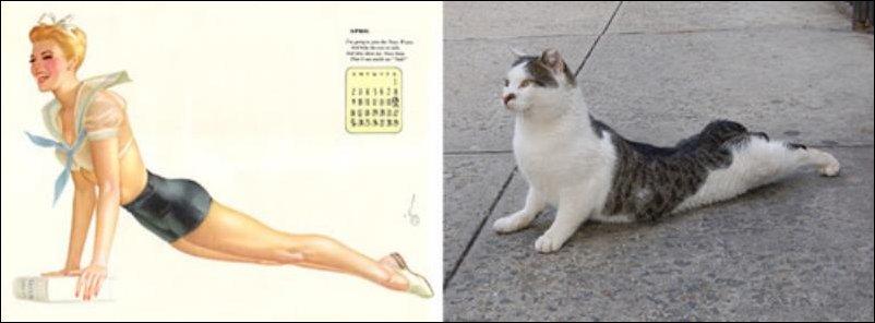 Коты и пин-ап девушки