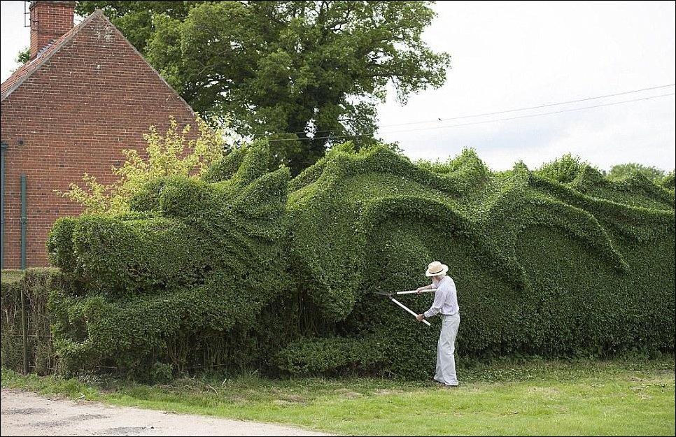 Садовник выстриг дракона