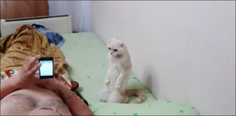 Кошка стоя слушает гимн РФ