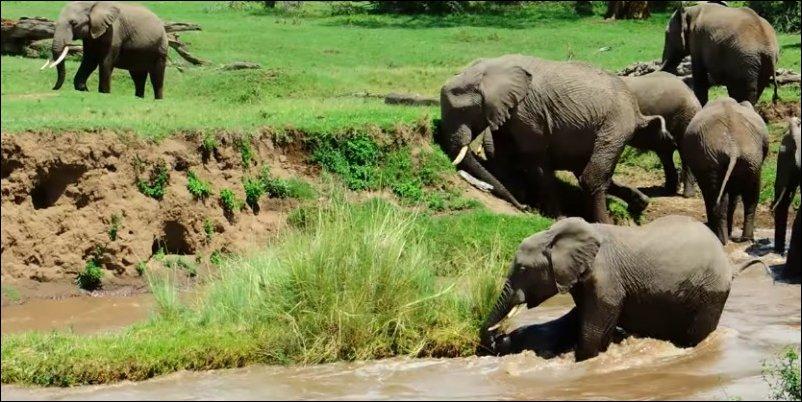 Слоны своих не бросают