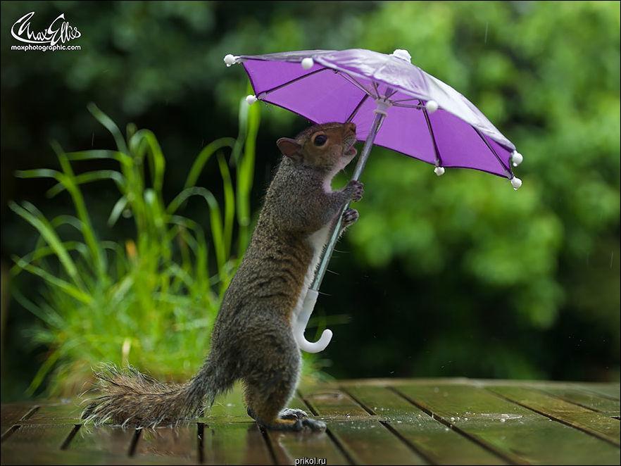 Белка с зонтиком