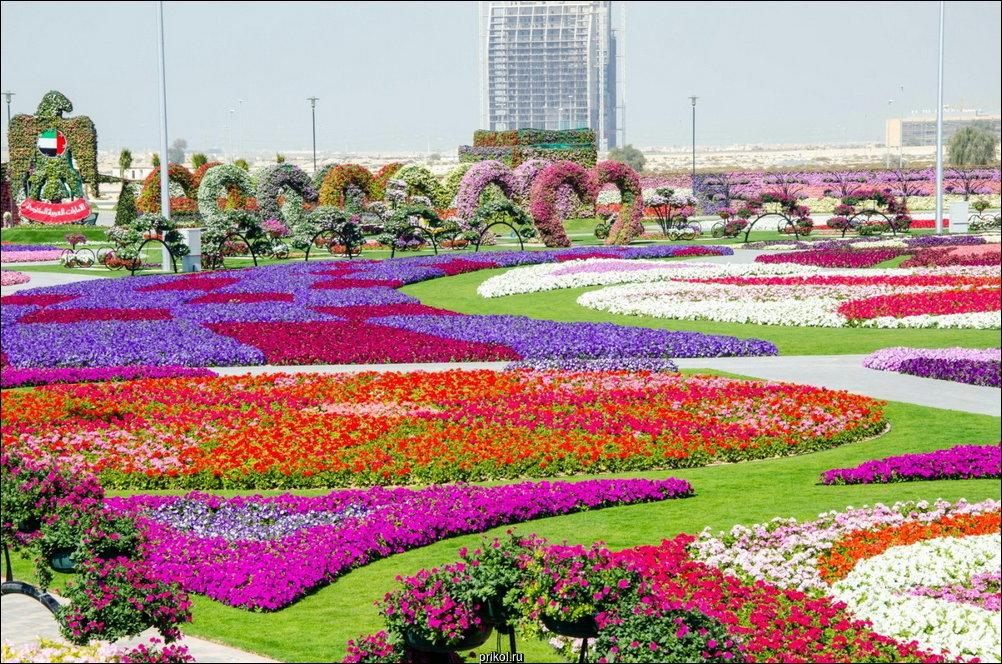 Чудо-сад в Дубае