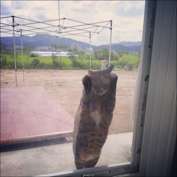 Впустите