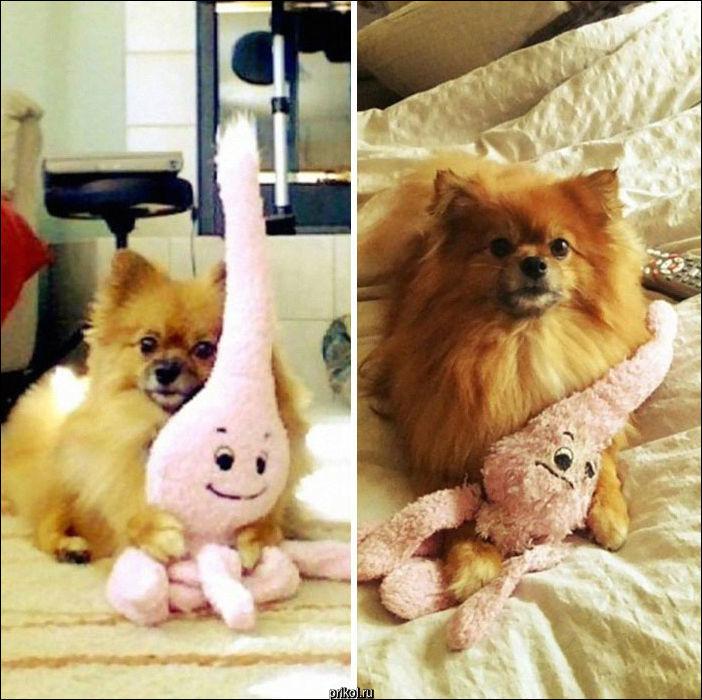 Животные и их любимые игрушки