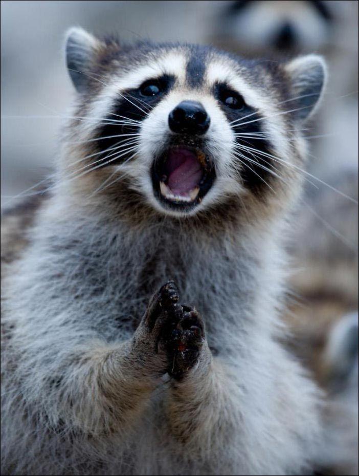 удивленные животные фото верит