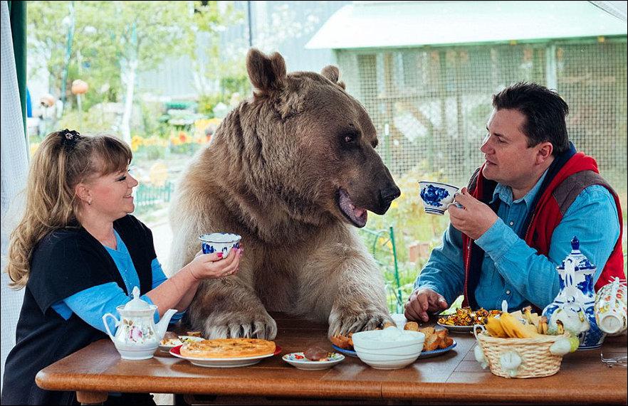 медведь Степан