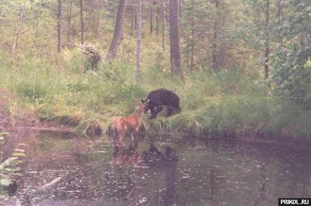 bear-and-deer-01