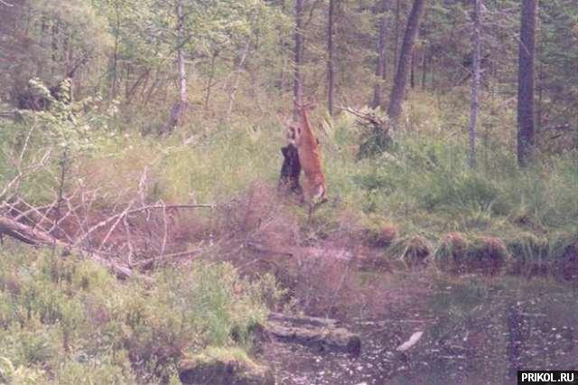 bear-and-deer-03
