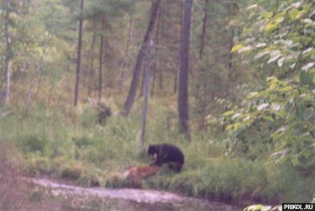 bear-and-deer-04