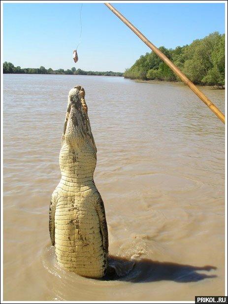 croc-feeding-03