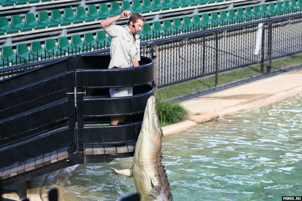 croc-feeding-06
