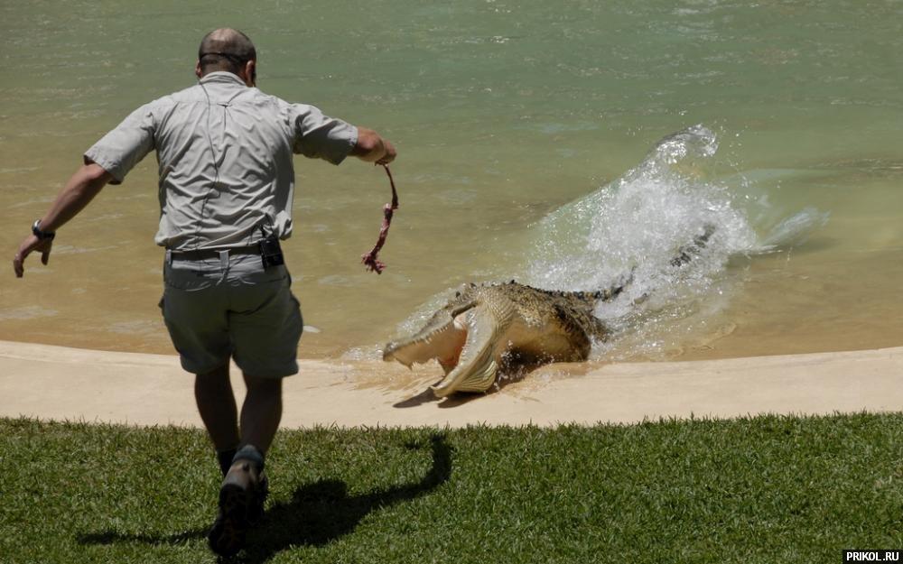 croc-feeding-07