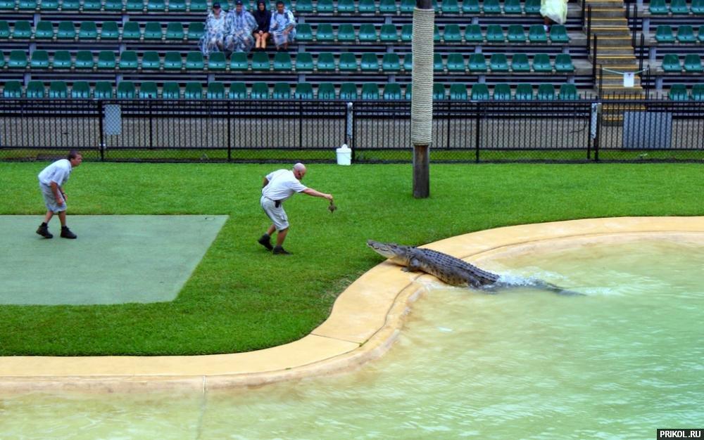 croc-feeding-08