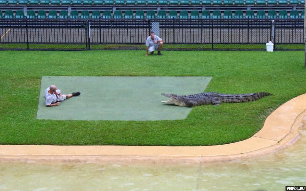 croc-feeding-09
