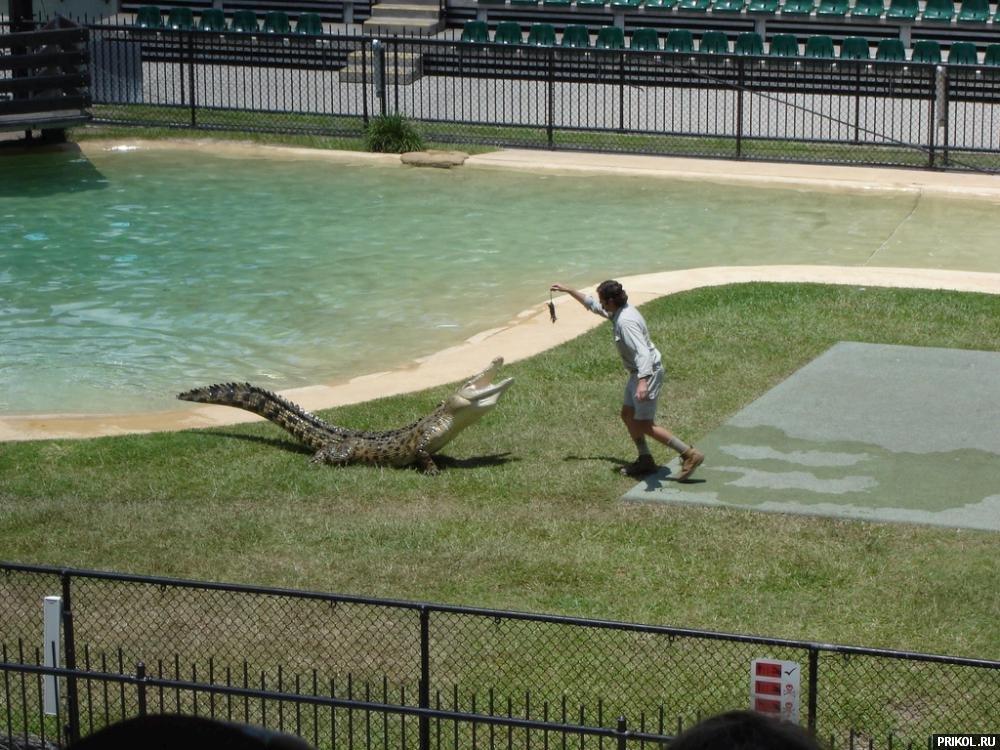 croc-feeding-12
