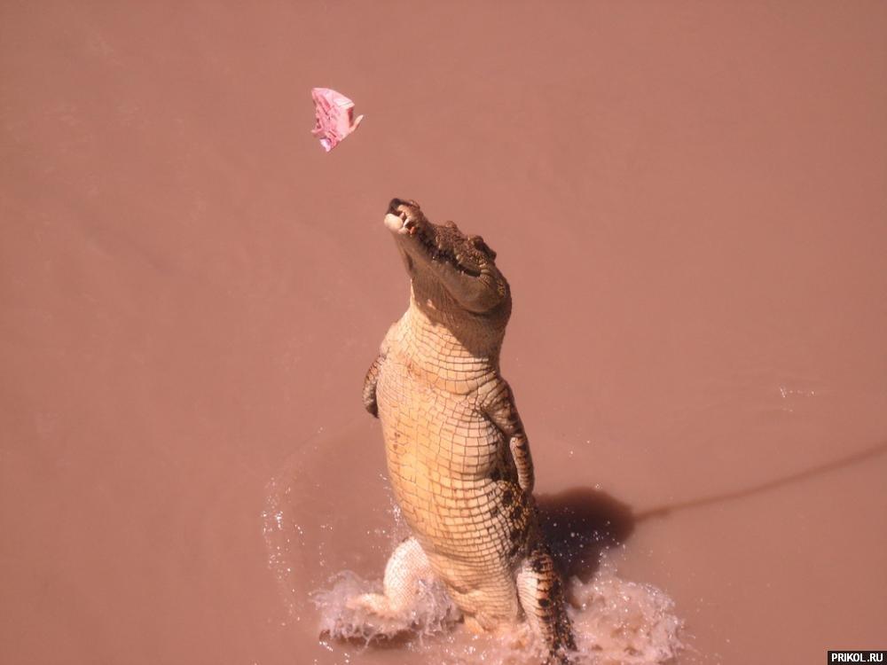 croc-feeding-13