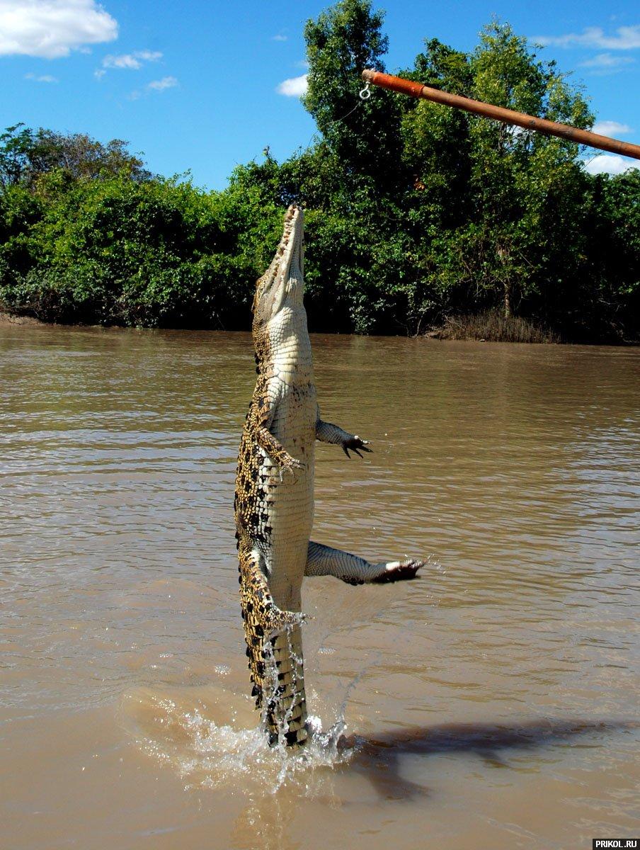 croc-feeding-14