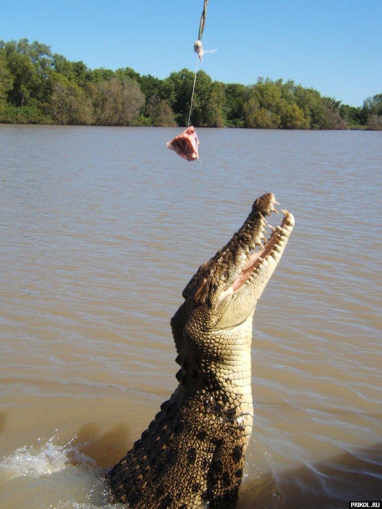 croc-feeding-18