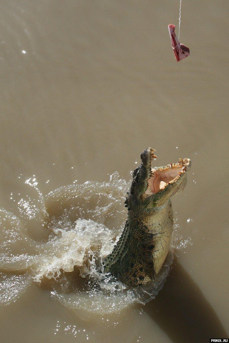 croc-feeding-20