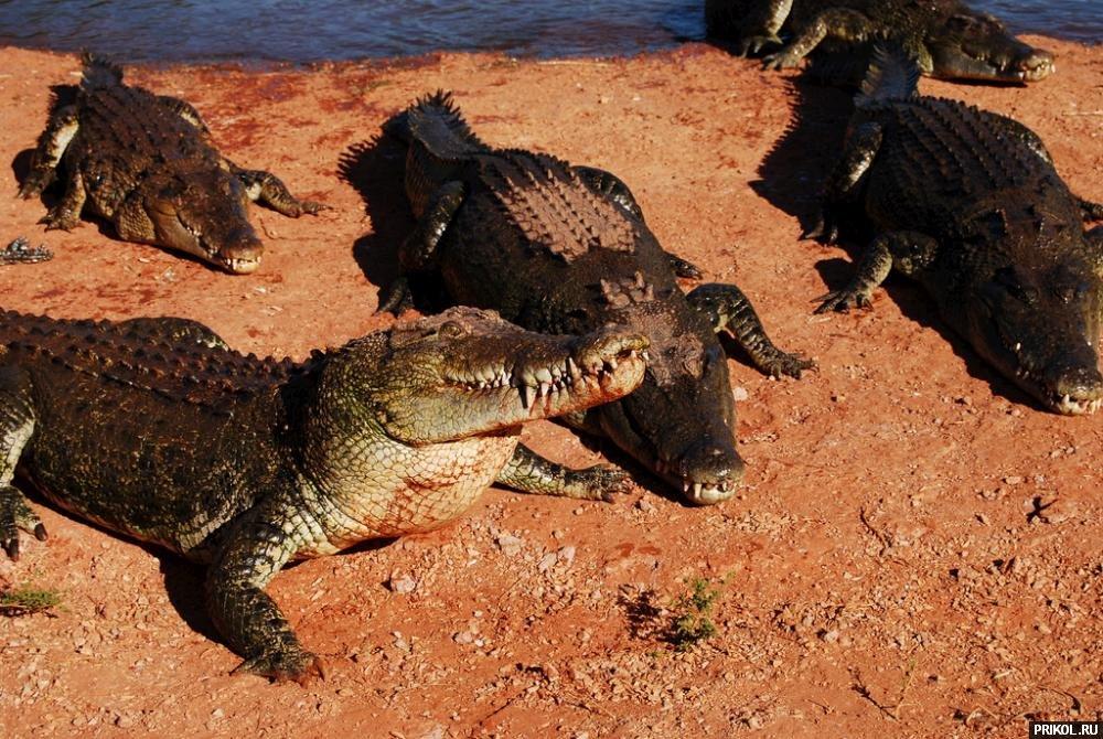 croc-feeding-23