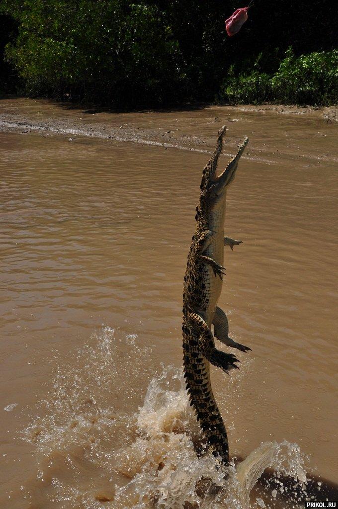 croc-feeding-24