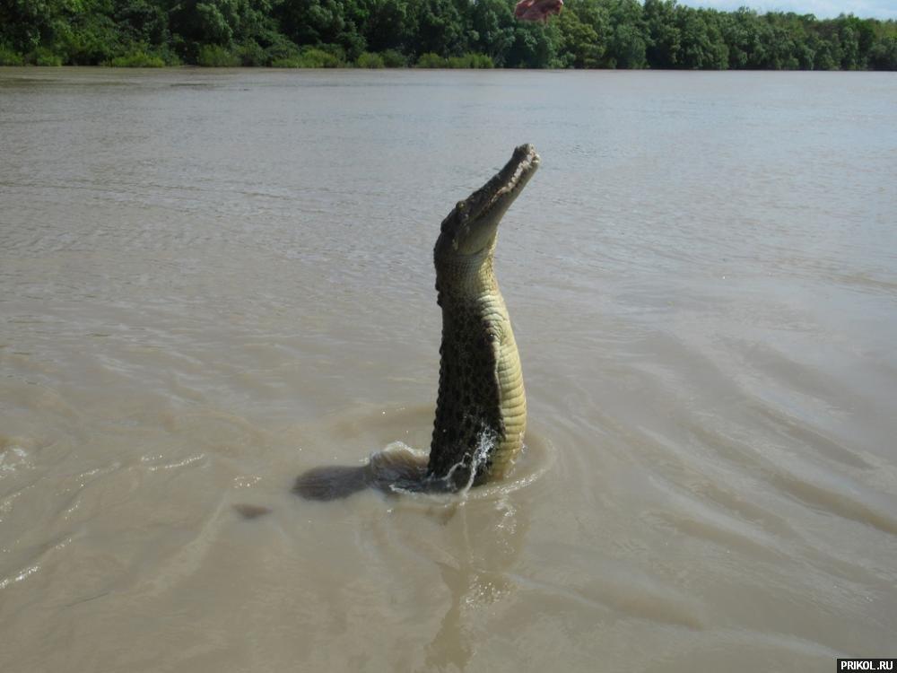 croc-feeding-25