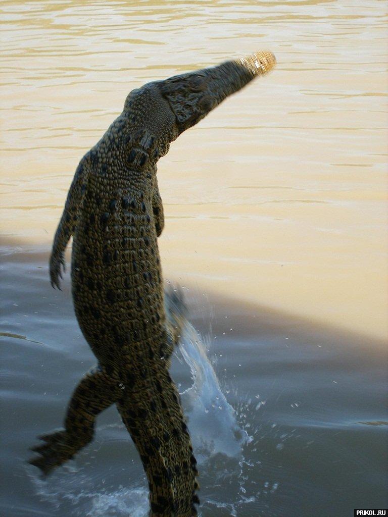 croc-feeding-26
