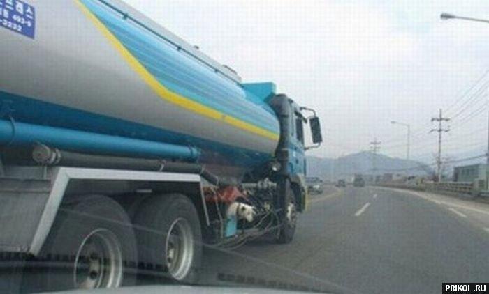 dog-in-truck-04