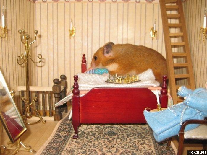 hamster-house-05