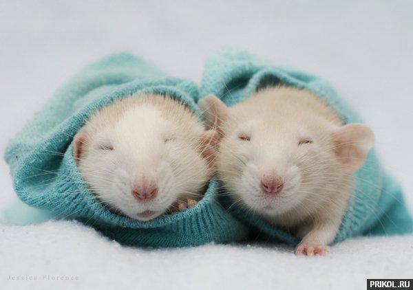 rats-04
