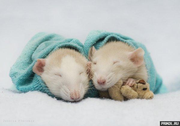 rats-05