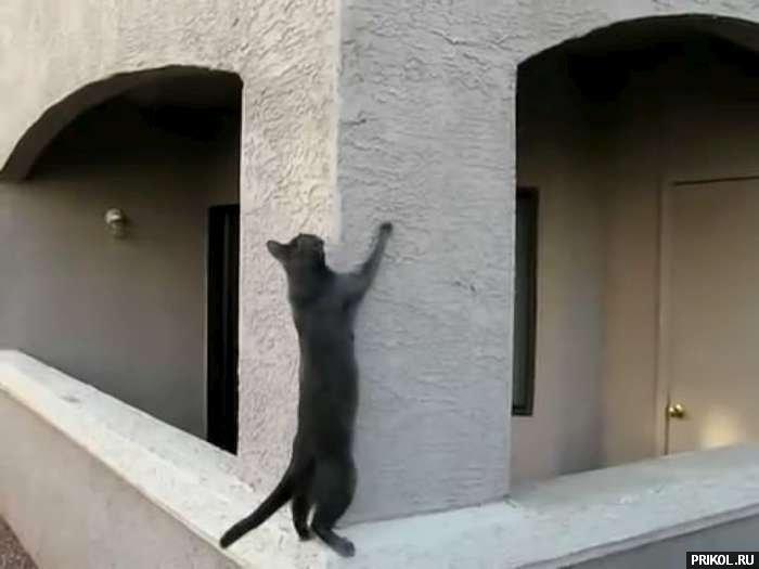 spidercat-01
